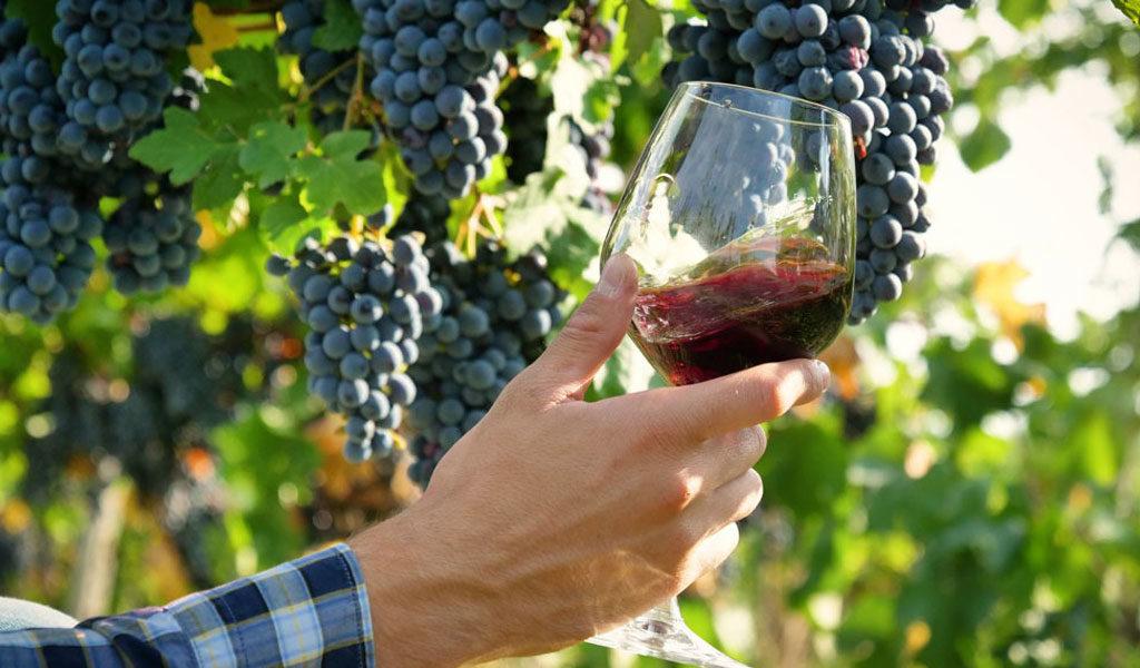 7 razones para beber vino - In Vino Frances - Veritas