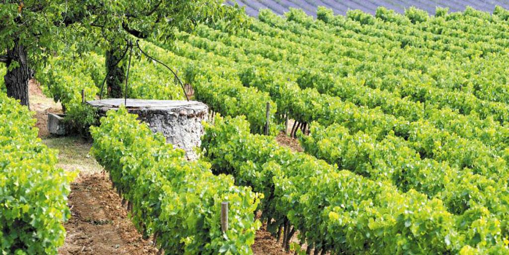 In Vino Frances Veritas - La Provenza