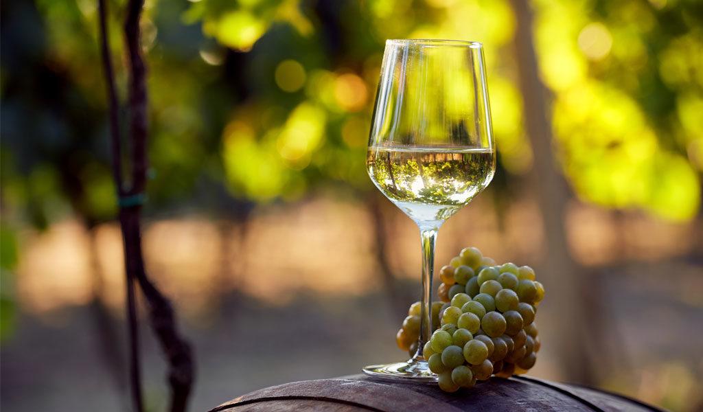 Serie las Cepas  – Chardonnay