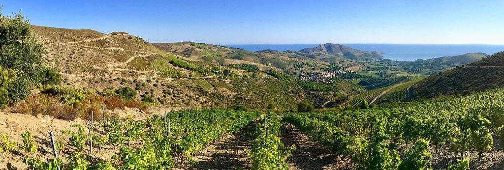 In Vino Frances Veritas - Perpignan