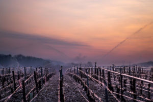 In Vino Frances Veritas - Frost