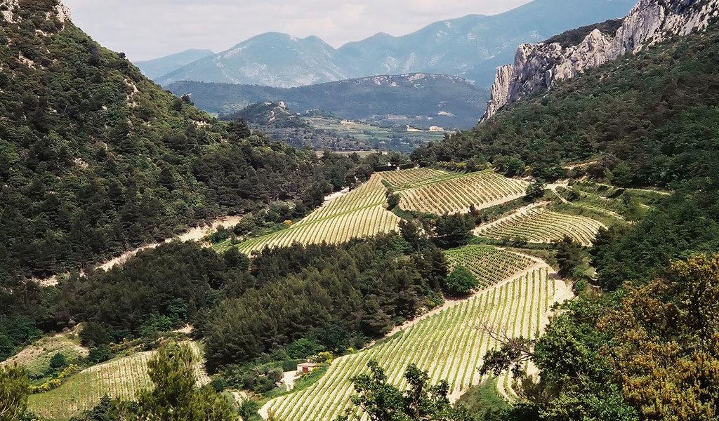 In Vino Frances Veritas - Taller 12 - Côtes-du-Rhône