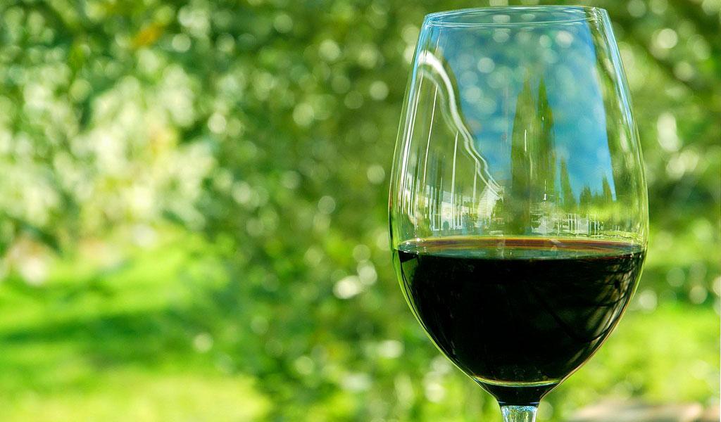Taller de vinos orgánicos franceses y merienda